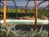 abris_piscine_bois_exposition010